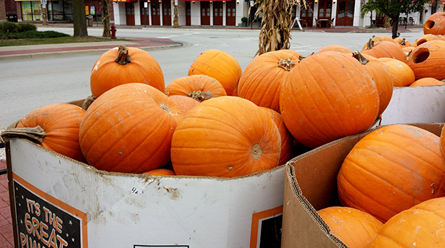 Pumpkins at the Great Highwood Pumpkin Festival